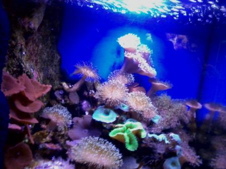 Agde 2014 - Aquarium
