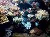 Aquarium_17.jpg